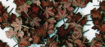Plus Model Maple Leaves (juhar) - extra colors