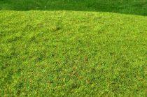 Model Scene Cut Meadow - Spring