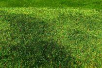 Model Scene Cut Meadow - Early summer