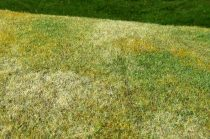 Model Scene Cut Meadow - Late summer