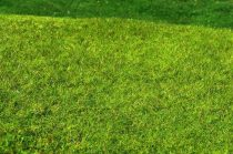 Model Scene Meadow - High-grown, Spring