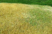 Model Scene Meadow - High-grown, Late summer
