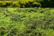 Model Scene Low bushes - Spring