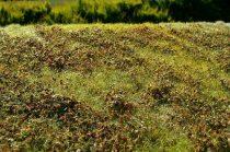 Model Scene Low bushes - Autumn