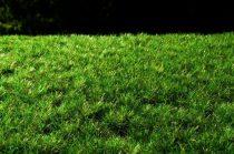 Model Scene Tufts, dark green 6mm (fűcsomó)