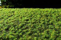 Model Scene Small turfs - spring (fűcsomó)