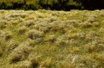 Model Scene Fallow field, Late summer