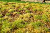 Model Scene Steppe unwatered (late summer)