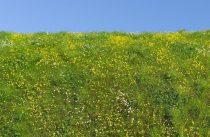 Model Scene Blooming meadow - spring