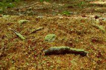 Model Scene Forest base - late summer
