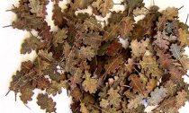 Plus Model Oak Leaves (tölgy) - extra colors