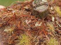 Model Scene Dry fern
